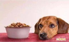大家都知道养狗喂狗粮!