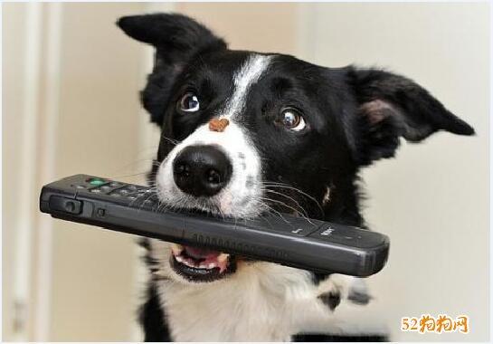 训练狗狗的方法