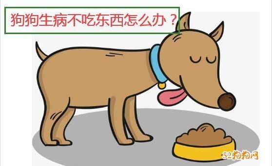 狗狗生病了不吃东西怎么办