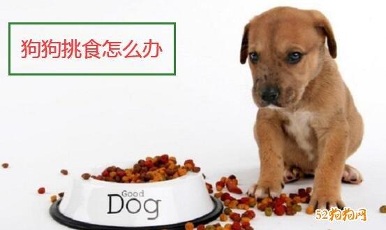狗狗挑食怎么办