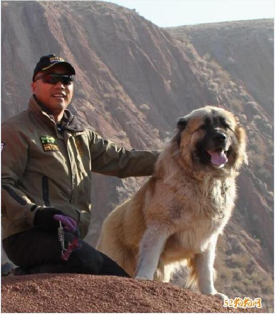 高加索狗图片