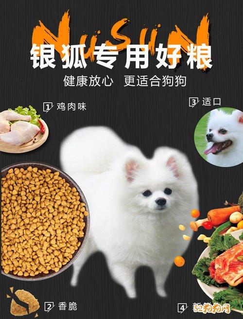 银狐犬吃什么?银狐犬适合吃什么食物?