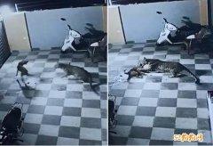 最好的看护犬!印度宠物