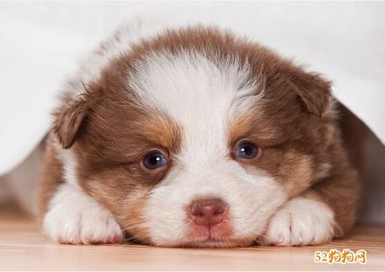 宠物狗照片4