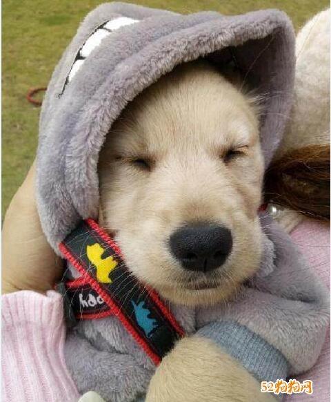 宠物狗照片5