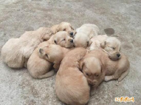 宠物狗照片8