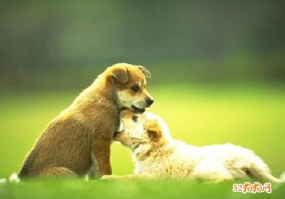 宠物狗照片14