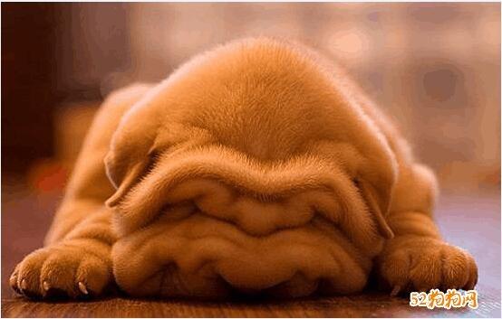 宠物狗照片16