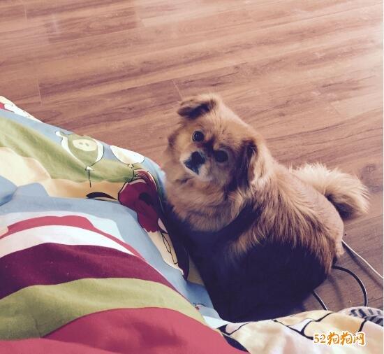 免费赠送狗狗图片4