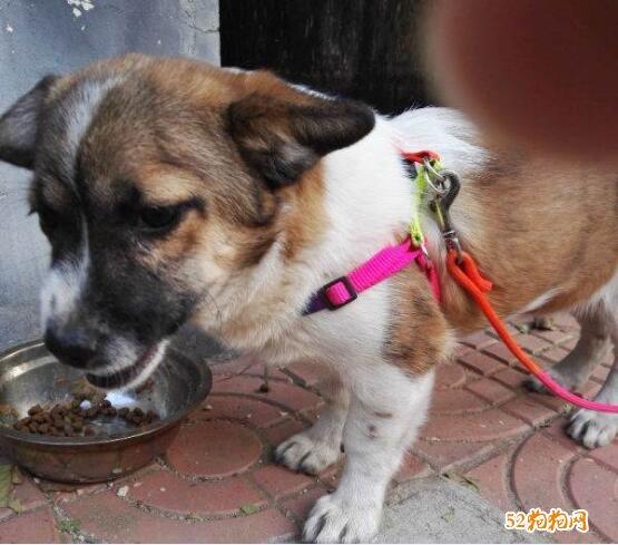 免费赠送狗狗图片7