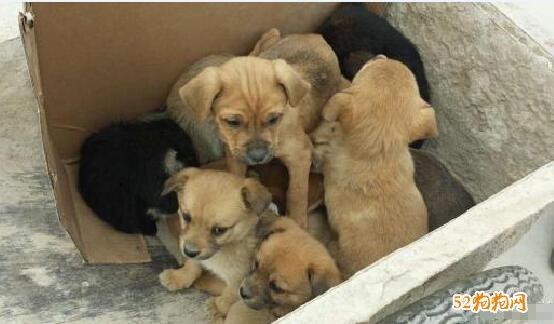 免费赠送狗狗图片8