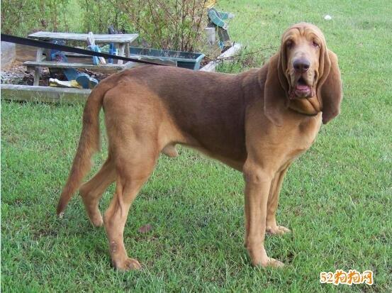大型狗的品种图片大全