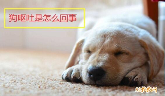 狗呕吐是怎么回事