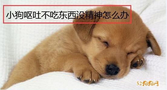 小狗呕吐不吃东西没精神怎么办