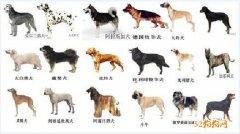 红网:宠物狗管理不妨参