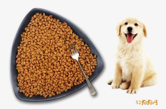 金毛犬吃什么食物