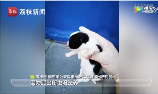 南京市民报警小区有六只