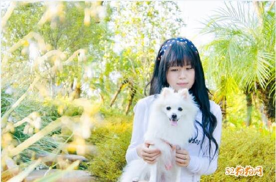 白色博美犬图片8