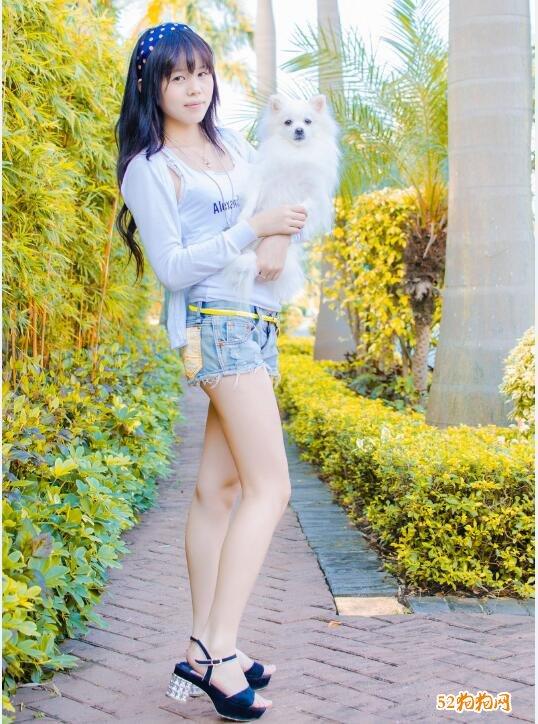 白色博美犬图片2
