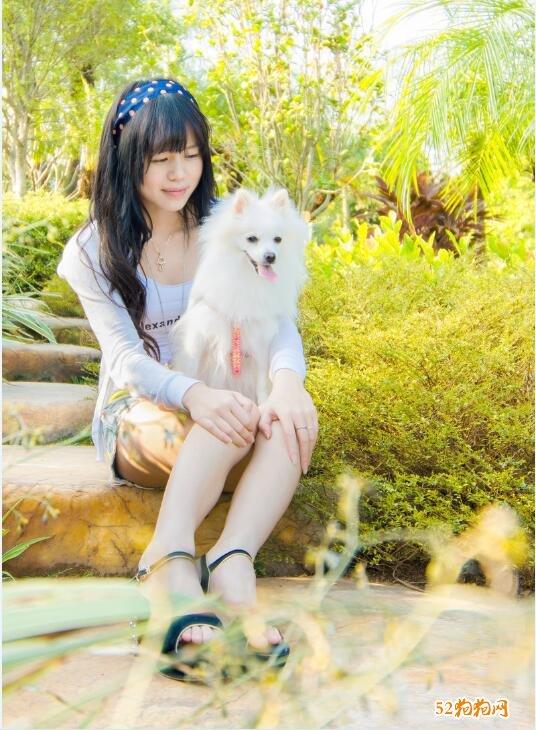 白色博美犬图片5