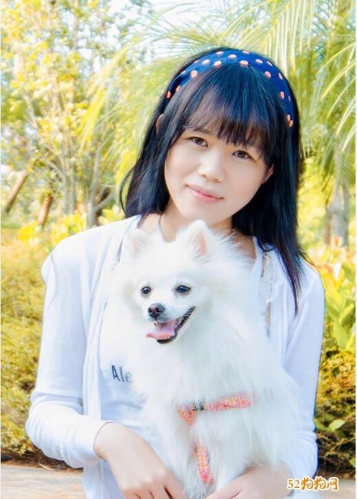 白色博美犬图片6