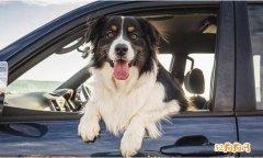 提醒!宠物狗坐车探头出