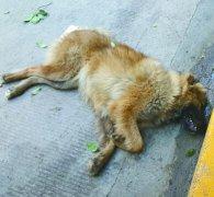 宠物狗坠落砸坏车辆赔钱