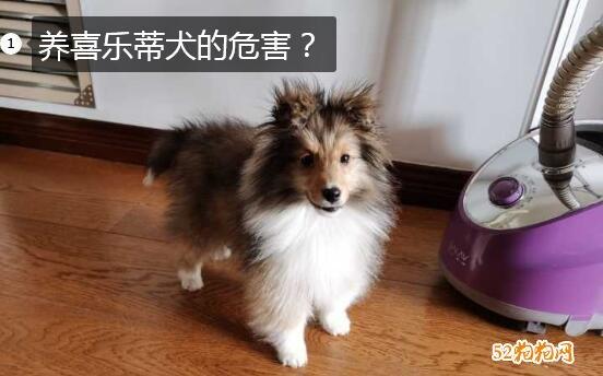 养喜乐蒂犬的危害?