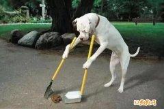 宠物狗邻居商铺门前排泄