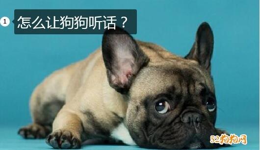 怎么让狗狗听话?