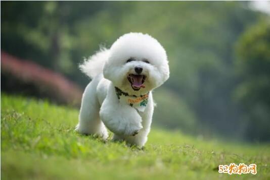 狗怎么训练、新手训狗的方法大全!