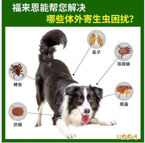 宠物体外驱虫怎么滴图解