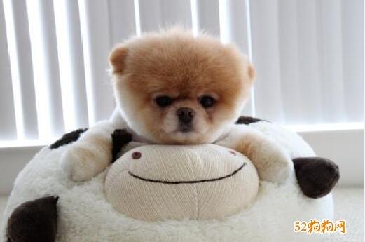 可爱小狗狗图片1
