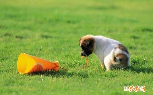可爱小狗狗图片3
