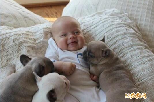 可爱小狗狗图片5