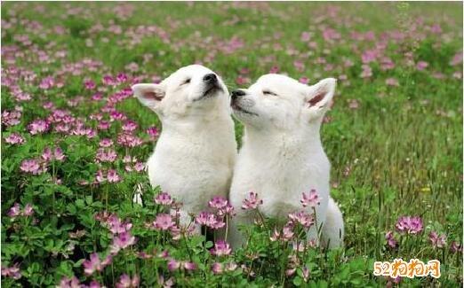 可爱小狗狗图片7