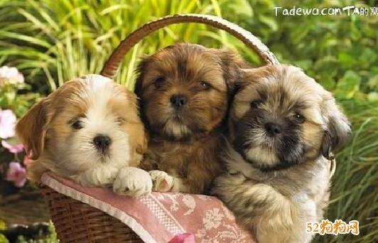 可爱小狗狗图片8