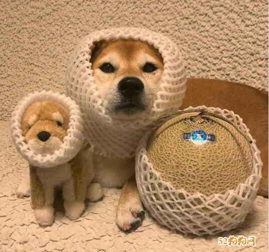 可爱小狗狗图片9