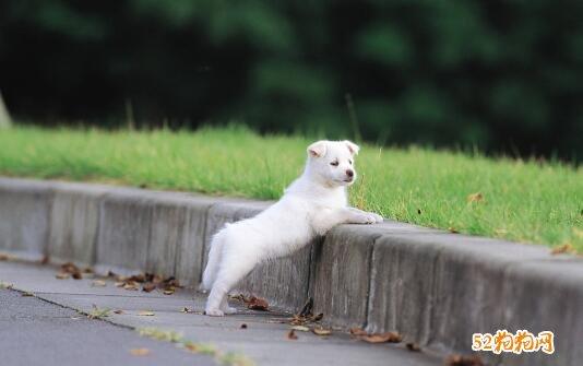 可爱小狗狗图片11