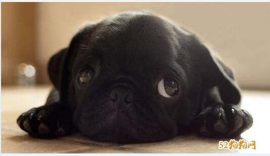 可爱小狗狗图片12