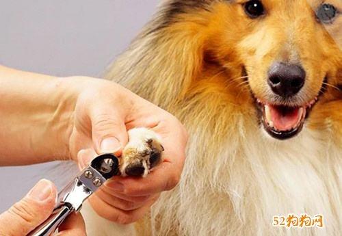 狗狗美容培训学校