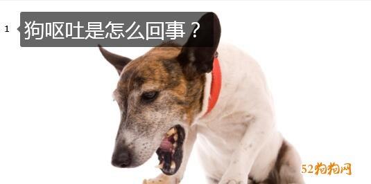 狗呕吐是怎么回事?