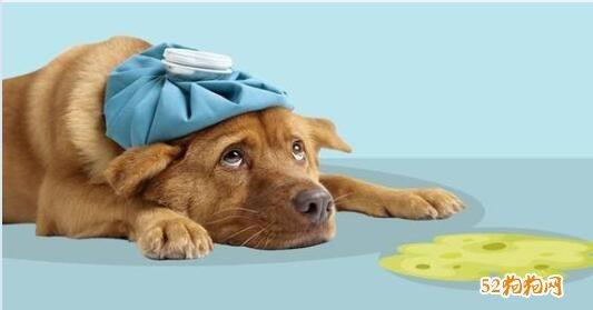 狗狗吐了没精神不吃东西怎么办?