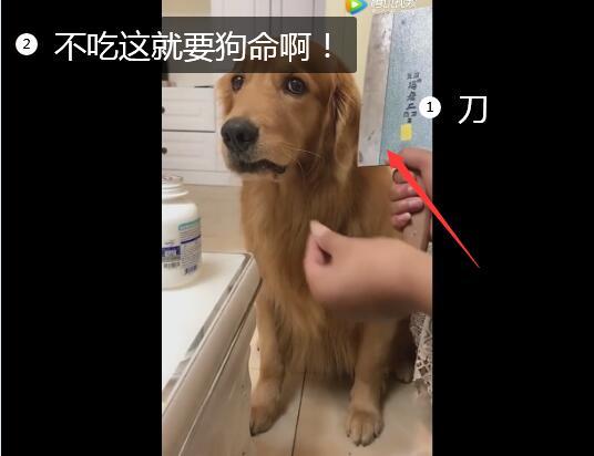 给狗看的视频、尼玛!这太吓狗了!不吃就要狗命啊!