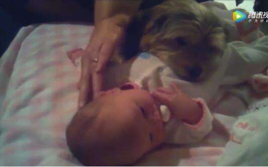 萌娃和宠物狗狗搞笑视频集合版!