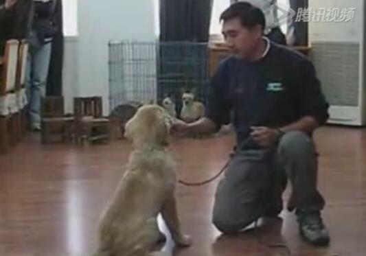 狗狗训练视频教程、8分钟教你学会训练狗狗!