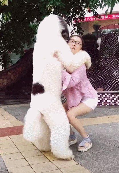 大泰迪狗多少钱一只?