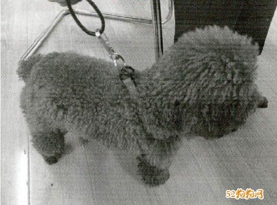 杭州男子看别人家狗太可爱偷抱回家!以盗窃罪判处!