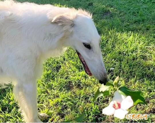 俄亥俄州怪异宠物狗!狗脸像马脸、鼻子长31厘米!