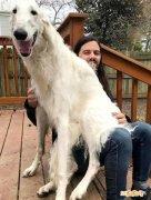 俄罗斯网红狗:俄亥俄州怪异宠物狗!狗脸像马脸、鼻子长31厘米!